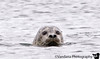 August 1, 2007 - Harbor Seal in Chiniak Bay, Kodiak Island ( not otter, sorry !)<br /> <br /> another animal added to the list at Kodiak Island ! We fly back to Anchorage tomorrow. last and another beautiful day in Kodiak Island today. Trip will continue north of Anchorage from tomorrow :)