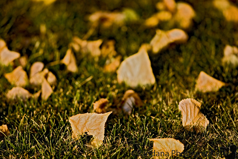 August 25, 2007 - Fall