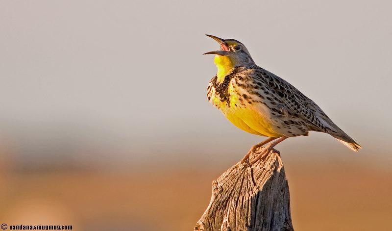 "February 16, 2007 - is spring coming ?!  some new birds I spotted <a href=""http://vandana.smugmug.com/gallery/1004039#130111960"">here</a>"