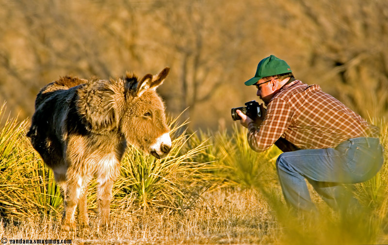 February 26, 2007 - Photographer at work<br /> <br /> found this guy trying to get too friendly with some donkeys for some portraits !