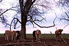 February 24, 2007 - Curious Cattle