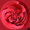 "Jan 9, 2007 - a rose encircled   <a href=""http://thecuriouscamel.smugmug.com/"">Gail</a> emailed me this action long time back, and I never got a chance to try it and in a time crunch, it served well :)"