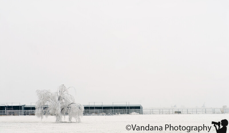 Jan 13, 2007 - Where has all the color gone ?<br /> <br /> a lone tree shivers in the cold