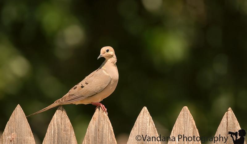 July 14, 2007 - Dove pose