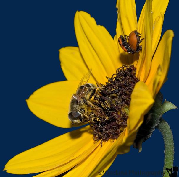 July 8, 2007 - Bug activities