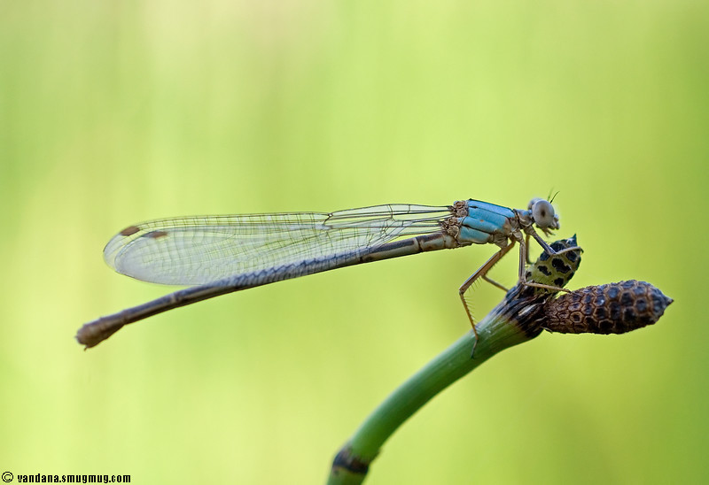 """June 24, 2007 - Shooting dragonflies !!  More <a href=""""http://www.vandanaphotography.com/gallery/3054295"""">here</a>"""