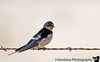 May 2, 2007 - a swallow on the wire