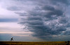 May 20, 2007 - Into the storm<br /> <br /> I was wondering what you folks think about this as a LPS semi entry ?<br /> tell me if it is blah :)..it's been cloudy all week, can't do much else..