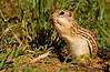 May 16, 2007 - Squirrel for Nonda