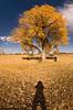 November 13, 2007 - Photographing fall