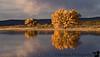 November 12, 2007 - Morning reflections at Bosque Del Apache NWR