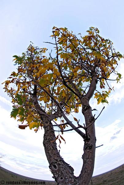 October 5, 2007 - changing seasons