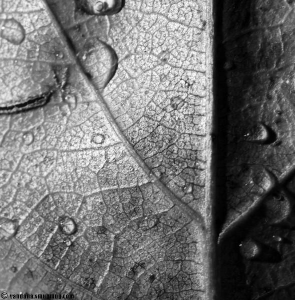 October 8, 2007 - Leaf macro