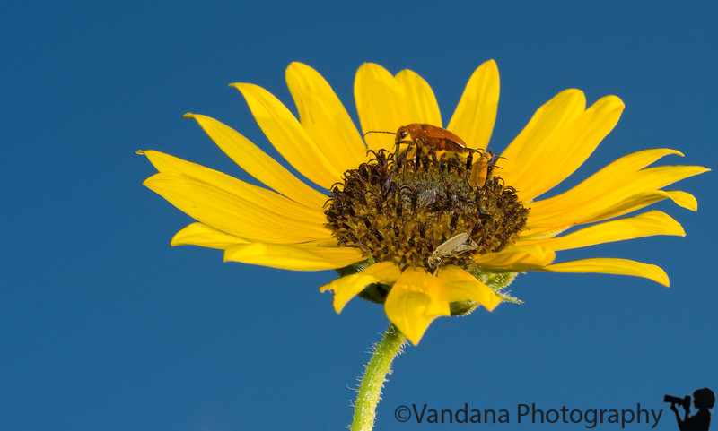 August 21, 2008 - Summer and Sunflowers