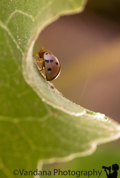July 7, 2008 - Climbing up the leaf