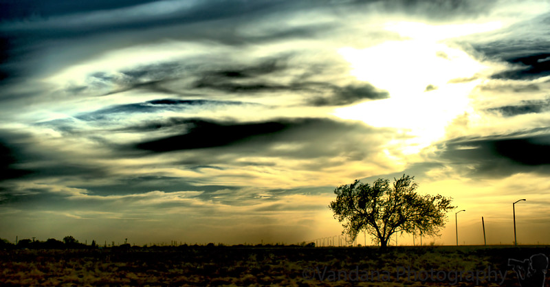 May 8, 2008 - Lone tree in the storm