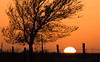 April 18, 2008 - the usual, tree and sunset