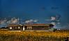 September 12, 2008 - House of sunflowers