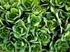 April 12, 2008 - Cactus flower