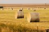 September 29, 2008 - Hay Field