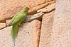 Jan 22, 2008 - Parakeet amidst the Mughal architecture