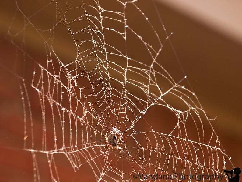 October 4, 2008 - Weaving a web