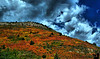 September 22, 2008 - Is it fall yet ?!<br /> <br /> a shot from the weekend at Sandia Mountains