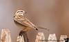 April 28, 2008 - More backyard birding