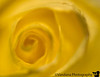 Feb 27, 2008 - yellows