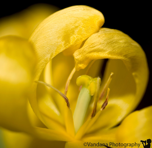 Feb 8, 2008 - Yellows