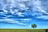 May 20, 2008 - My lone tree