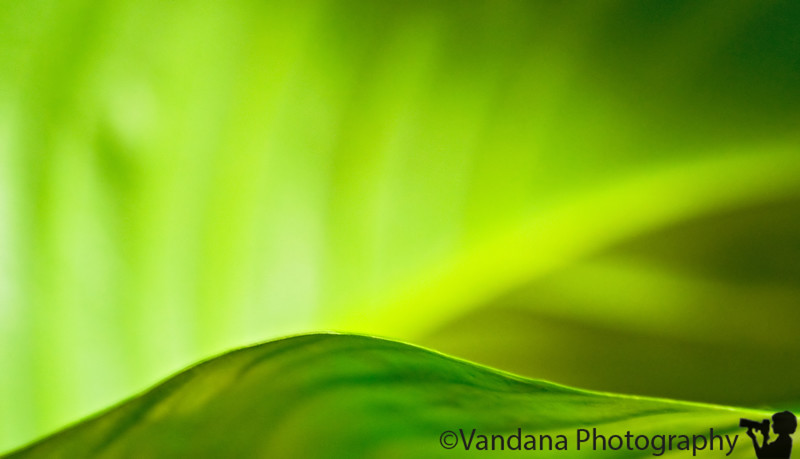 April 26,2008 - Abstract greens