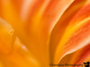 July 6, 2008 - abstract flower