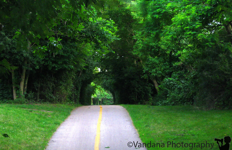 July 26, 2009 - A walk in the woods - Lake Bluff, IL.
