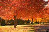 November 1, 2009 - the end of fall