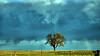 "April 27, 2009 - My lone tree.   Photographed many times, in many seasons - <a href=""http://vandana.smugmug.com/popular/1/184727446_JfNYM#299034055_sBSsE"">May 2008</a> in <a href=""http://vandana.smugmug.com/popular/1/184727446_JfNYM#93769732_gMTpt"">September 2006</a>"