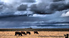 April 17, 2009 - Cows in the storm