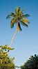 Jan 22, 2009 - The palm tree and the moon, Sanibel Island, FL
