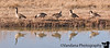 Feb 4, 2009 - Canada Geese reflections