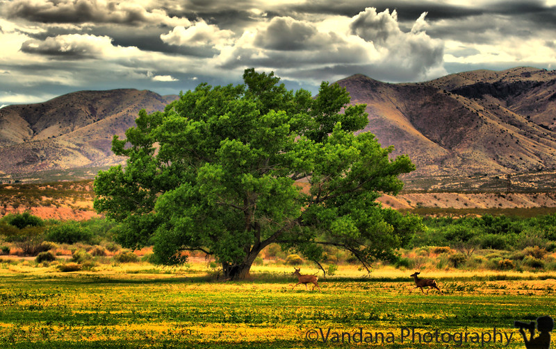 "June 26, 2009 - The changing landscape at Bosque Del apache NWR.  the same location in November <a href=""http://vandana.smugmug.com/gallery/3781756_MZ8Nx/2/220815971_V5bHi/Large"">here"