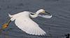 Jan 4, 2009 - Egret in flight, Viera Wetlands, FL