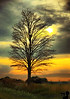August 3, 2009 - a lone tree in IL. <br /> Mom got admitted to a hospital in India, maybe an arrythmia ? Last minute flight booked to India on the 5th. Hope everything goes well !
