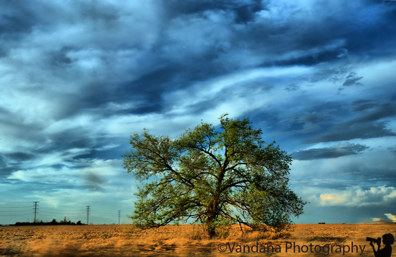 March 31, 2009 - Landscape photography on the drive