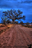 "March 9, 2009 - Fort sumner blues. The <a href=""http://vandana.smugmug.com/gallery/4093660_rAmha/1/418958787_uQGFV/Medium"">same tree in the fall here</a>"
