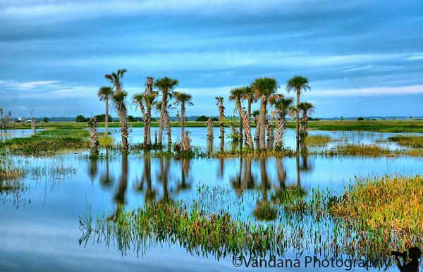 Jan 18, 2009 - Reflections at Viera Wetlands