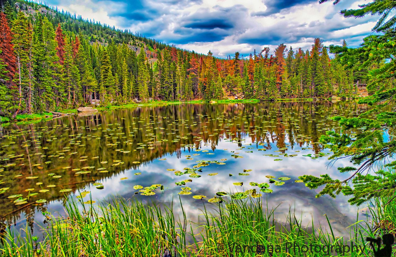 July 1, 2009 - Nymph Lake at Rocky Mountain National Park, CO.  More pics from RMNP here