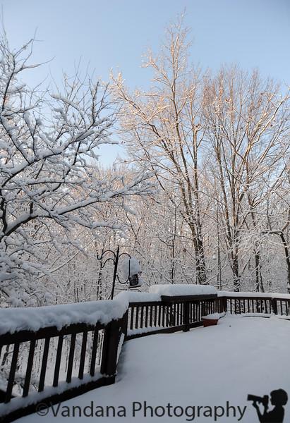 December 20, 2009 - Winter light