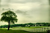 """June 11, 2009 - The lone tree, in <a href=""""http://en.wikipedia.org/wiki/Fox_Valley_(Illinois)"""">Fox River Valley</a>"""