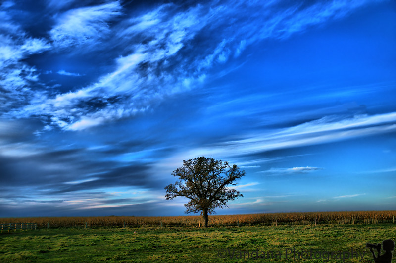 November 3, 2009 - An Illinois lone tree !<br /> <br /> got my H1N1 vaccine today, with no problems