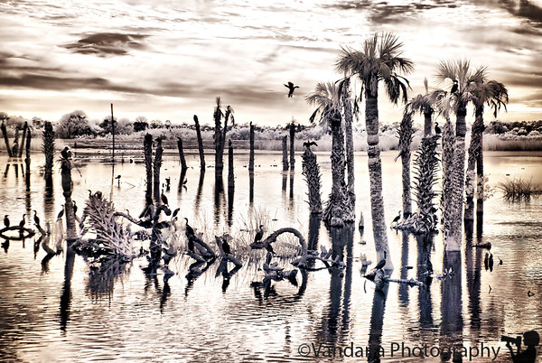 December 29, 2009 - Infrared Viera wetlands, Florida